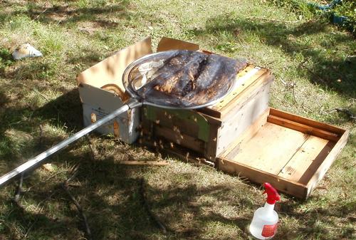 養蜂箱へのミツバチの引っ越し